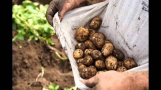 Alaska Grown: A New Look at Mat-Su Agriculture