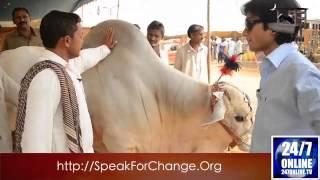Chalta Rahi - Bakra Mandi