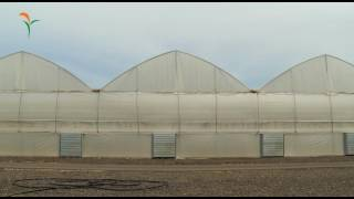 Advanced Greenhouses  -  Dagan Agricultural Automation Ltd.