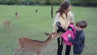 Deer park, Nara, Japan, 2011