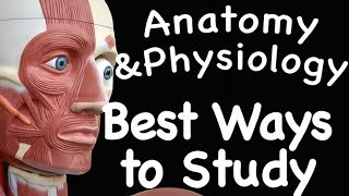 Muscular System : Best Ways to Study the Muscular System (09:08)