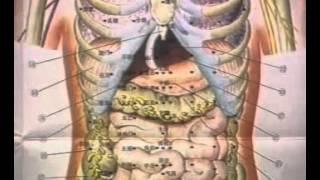 Medicina Tradicional China - 18  腧穴(续) POINTS  CONTINUED