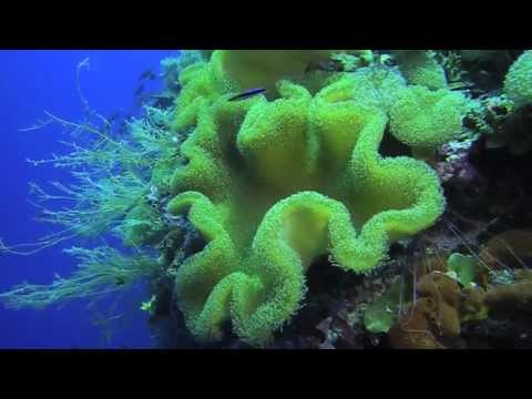 Biak Adventure Diving I - West Papua