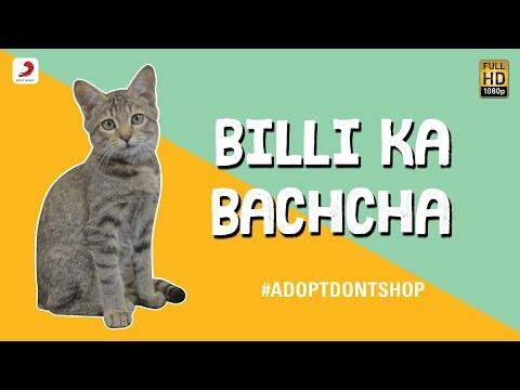 Xxx Mp4 Billi Ka Bachcha Ankur Tewari Bachcha Party Cute Kitten Video 3gp Sex