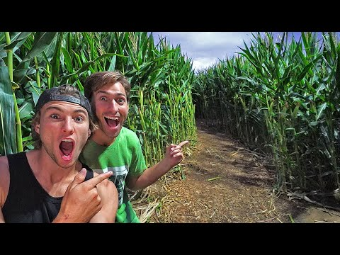 First to finish CORN MAZE WINS we are stuck inside