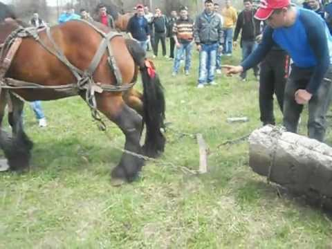 Caii lui Alexandru Veleanu