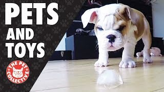Play Time!   Pets and Their Favorite Toys