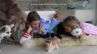 Baby Bunny Rabbits, Kittens, Puppies and a Parrot! Too cute!