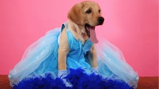 1 Puppy 5 Disney Princesses
