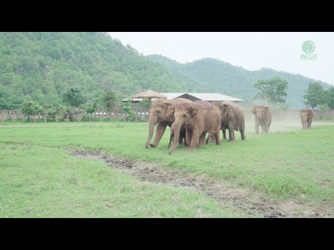 Xxx Mp4 Elephants Run To Greeting A New Rescued Baby Elephant 3gp Sex