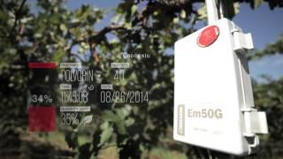 M2M en las viñas de Codorníu