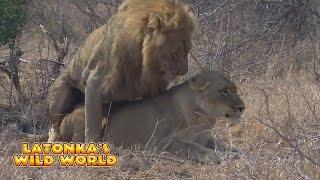 LaTonka's Wild World - Lion Hoes