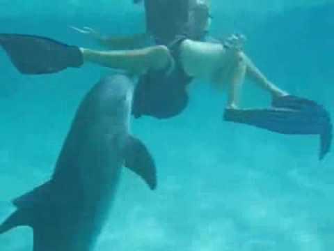 delfin atakuje cipke.avi