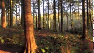 Video Backgrounds HD **Flying through the Forest** Free Video Intro & Video Loop