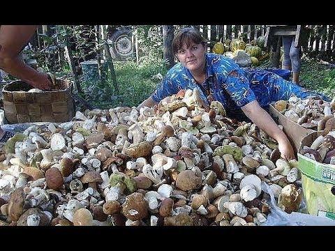 Выращивание грибов на дому белый гриб 92
