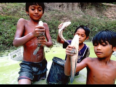 Amazing Kids Catch Big Fish in Cambodia - How to Catch A lot Of Fish in My Village