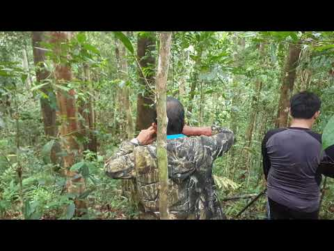Xxx Mp4 BP Video Barking Deer Hunting 3gp Sex