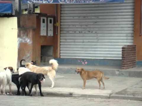 Cachorros Tranzando