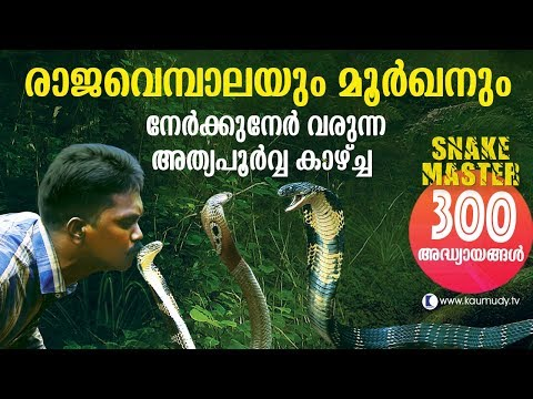 Wow King Cobra and Cobra face off in the jungle Snakemaster Vava Suresh