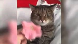 Funny cat reaction to flower