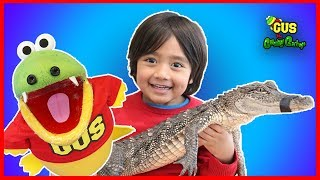 Pet Crocodile and Alligator In Real Life with Ryan ToysReview and Gus