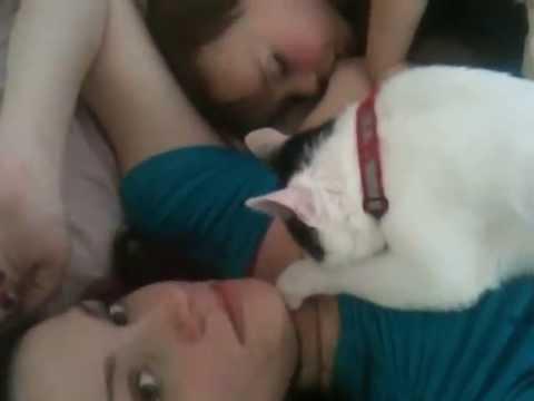 Xxx Mp4 Tandem Nursing Kitten And Baby 3gp Sex