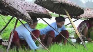 Got Rice? Subsistence Rice farming in Rural Nepal