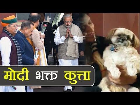 Xxx Mp4 Narendra Modi भक्त कुत्ते का Video देख भूल जाएंगे Rahul के Pidi को वनइंडिया हिन्दी 3gp Sex