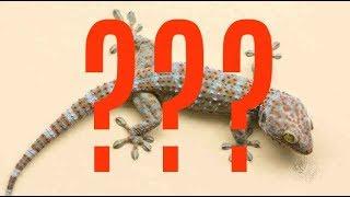 ما هو البرص أو الوزع - ArabTub3