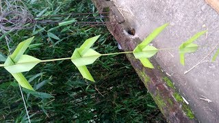 How to make palm South Indian style of flower (coconut tree leaf)