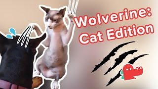 Kitty Got Claws: Funniest Crazy Cats Videos, Clips & Compilation