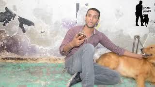 علاج الحروق عند الكلاب علاج بشرى عادى / مشاكل تبول الكلاب اثناء اللعب مع اصحابها .