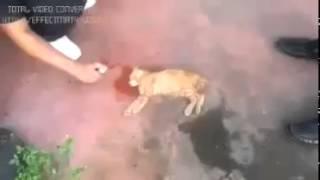 kesan garam dicampurkan air kepada kucing jalanan yang keracunan makanan