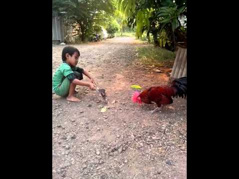 Anak vs Ayam