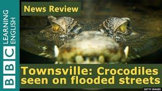 Townsville: Crocodiles seen in Australia