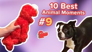 10 Best Animal Moments of the Day #9
