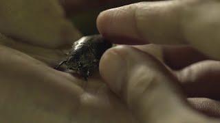 AN KUBO SA KAWAYANAN (2015) - Official Trailer - Mercedes Cabral Drama