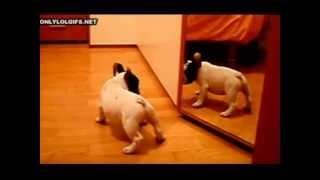 Video de perros y gatos graciosos - Funny dogs and cats