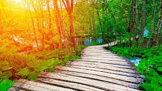 Music for Sleeping, Meditation Music, Soothing Sleep Music, Soft Music, Relaxing Sleep Music