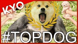 #TopDog