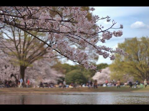 Wisata , Tujuan Wisata Ke Japang. 1 Tokyo