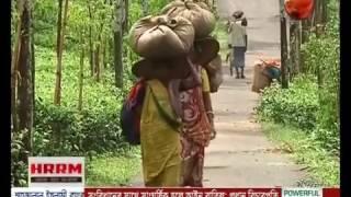 নিদারুন কষ্টে জীবন কাটাচ্ছে চা বাগানের শ্রমিকরা - CHANNEL 24 YOUTUBE