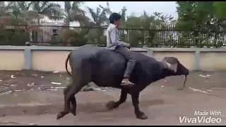 Hath ma che whisky song funny video