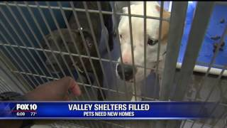 Valley shelters filled, pets need new homes