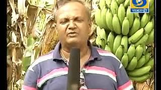 'Yashogatha - Keli Lagavadichi' _ 'यशोगाथा - केळी लागवडीची'