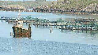 جدل في أيرلندا حول إنشاء مزرعة بحرية لإنتاج سمك السلمون