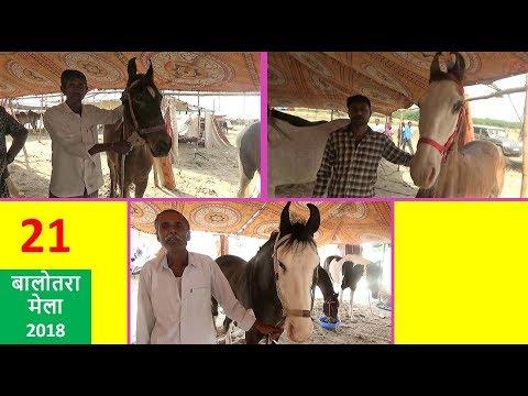 Xxx Mp4 Indian Racing Horses Trading Market Balotra Horse Fair 2018 India Sell Horses Online 3gp Sex