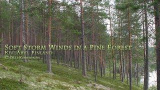 Soft Relaxing Wind White Noise for Sleep – Bruit Blanc du Vent Doux pour Dormir, Relaxation