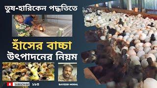 তুষ-হারিকেন পদ্ধতিতে হাঁসের বাচ্চা উৎপাদন করে সাবলম্ভি আলতাব, Duck hatchery, बतख खेत, البط التفريخ