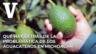 ¿Qué Hay Detrás De La Problemática De Los Aguacateros En Michoacán'